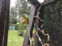 Sitzbrettchen Kork Voliere Vögel