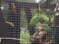 Kork-Astscheiben als Vogelsitz zur Befestigung an den Gitterstäben