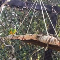 Korkrinde als Schaukel für Vögel zum Anknabbern, Spiele und Schaukeln