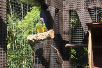 Edelstahl-Schrauben für den Bau von Vogelsitzstangen
