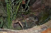 Kleine, genge Korkröhre für Mäuse kaufen