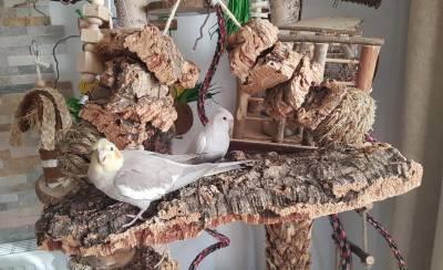 selbst-gebasteltes-vogel-schredder-brett