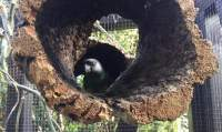 Kleine Korkröhre für Vögel zum Knabbern, Spielen und Verstecken