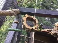 Ring aus Naturkork-Rinde zum Schaukeln und Anknabbern für Vögel